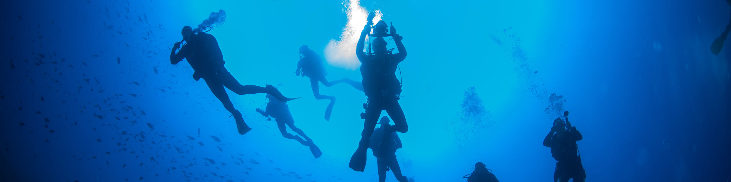 Diving Ecology Education